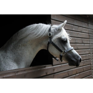 Just Equine Leather Head Collar
