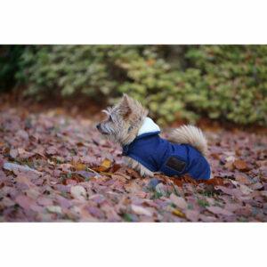 Kentucky Dogwear Dog Coats – Navy