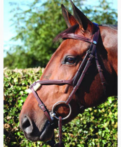 Dy'on New English Collection Grackle Noseband Bridle