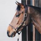 Kentucky Horsewear Anatomic Leather Head Collar