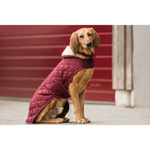 Kentucky Dogwear Dog Coats – Bordeaux