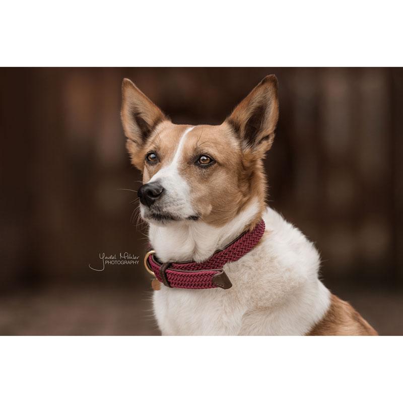 Kentucky Dogwear Dog Collar Bordeaux 1