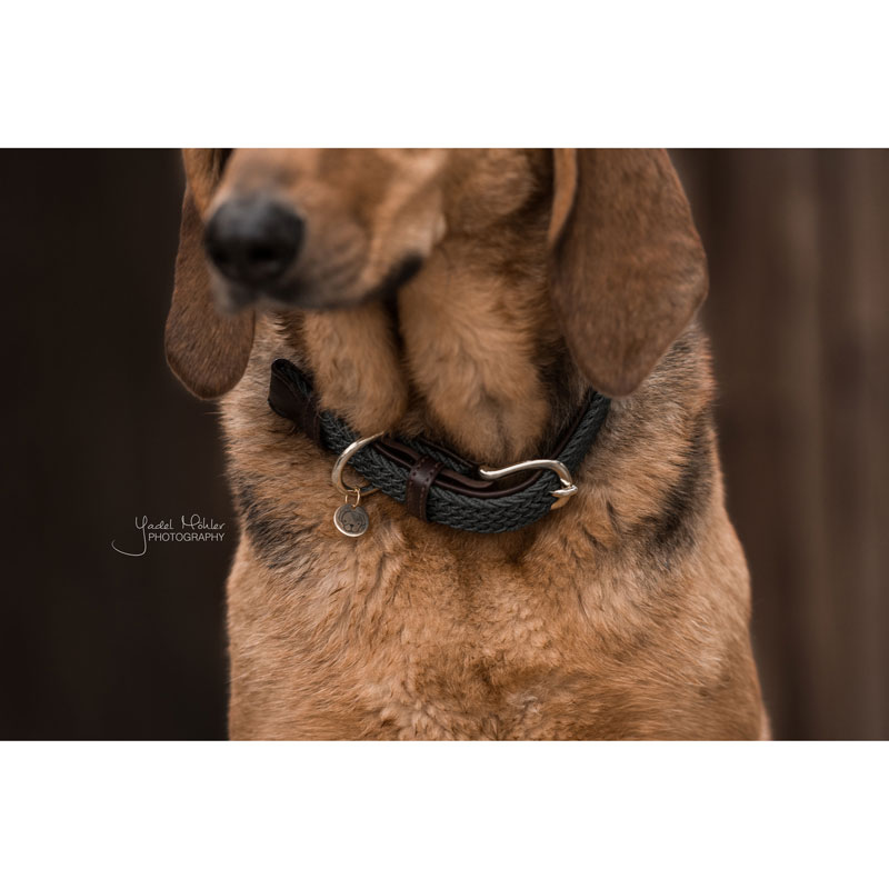 Kentucky Dogwear Dog Collar Bordeaux 2