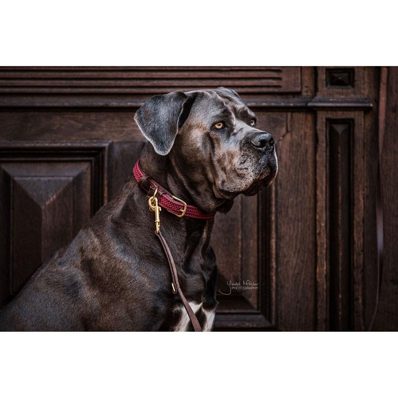 Kentucky Dogwear Dog Collar Bordeaux 3