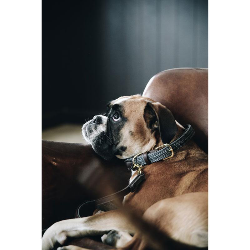 Kentucky Dogwear Dog Collar