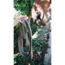 Kentucky Horsewear Stallion Lead Brown 1