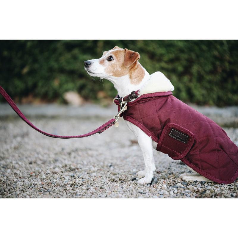 Kentucky Dogwear Bordeaux Dog Coats 5
