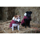 Kentucky Dogwear Bordeaux Dog Coats 6