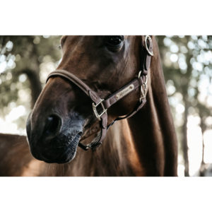 Kentucky Horsewear Anatomic Suede Head Collar