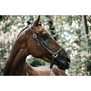 Kentucky Horsewear Flexible Leather Head Collar
