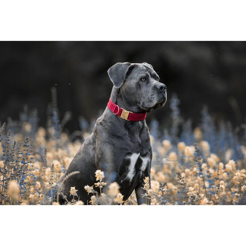 Kentucky Dogwear Corduroy Dog Collar
