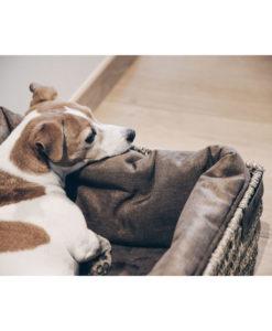 Kentucky Dogwear Dog Basket
