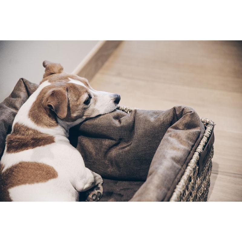 Kentucky Dogwear Dog Basket 6