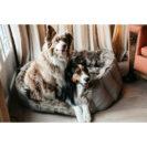 Kentucky Dogwear Dog Cave Bed