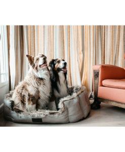 Kentucky Dogwear Dog Cave