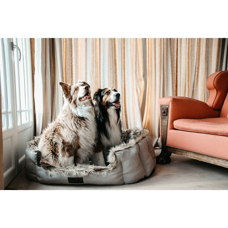 Kentucky Dogwear Dog Cave Bed 2
