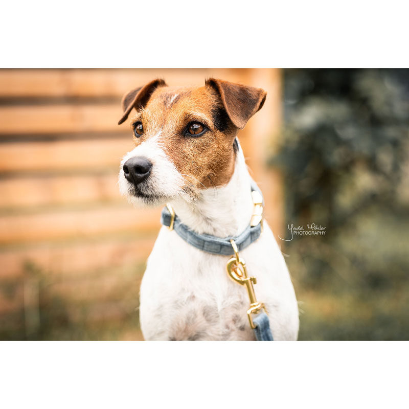 Kentucky Dogwear Velvet Dog Collars 3