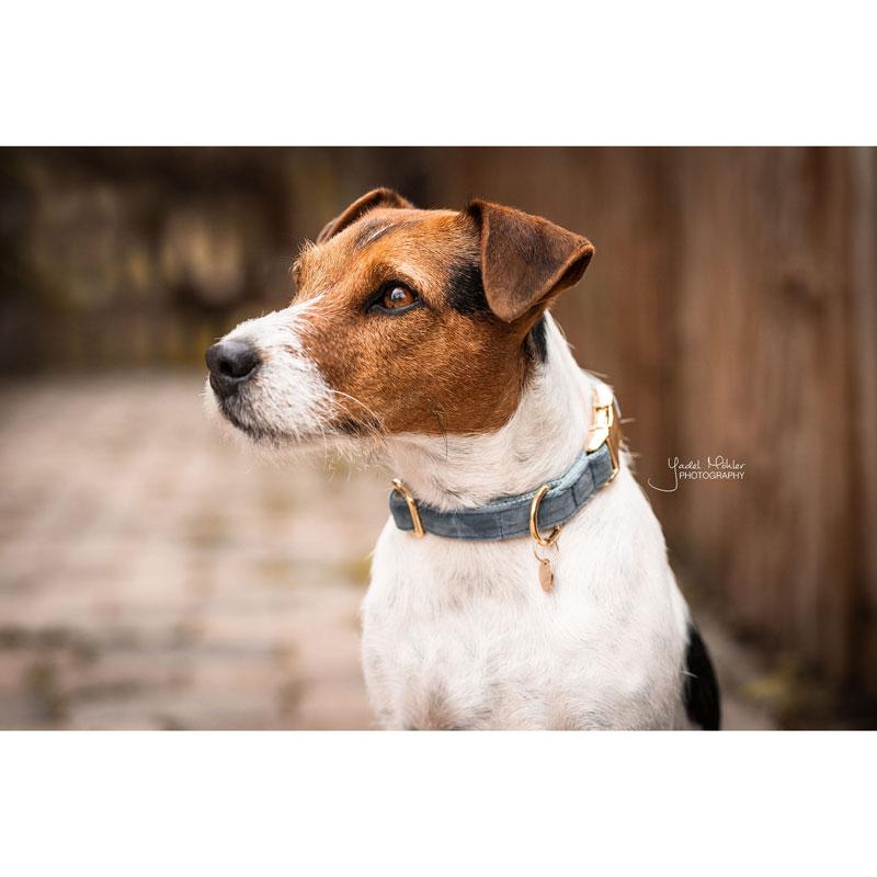 Kentucky Dogwear Velvet Dog Collars 4