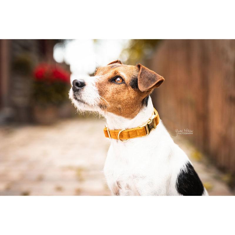 Kentucky Dogwear Velvet Dog Collars 6