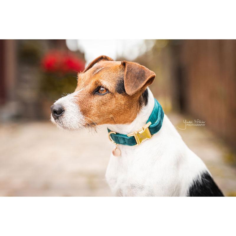 Kentucky Dogwear Velvet Dog Collars 7
