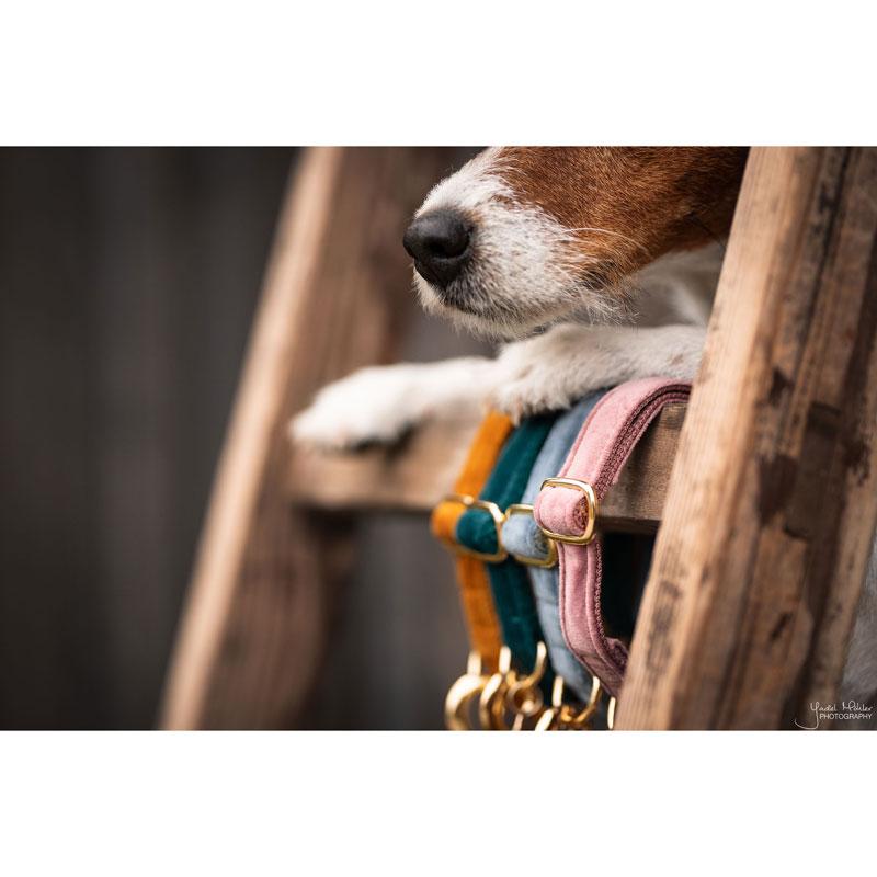 Kentucky Dogwear Velvet Dog Collars