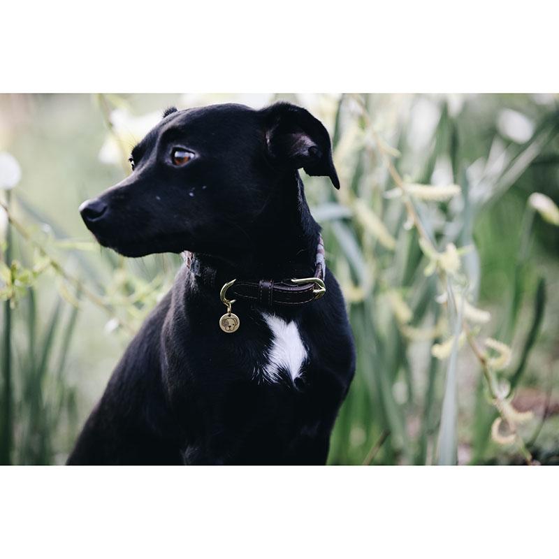 Kentucky Dogwear Collar Triangle