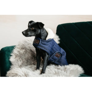 Kentucky Dogwear Coat Pearls