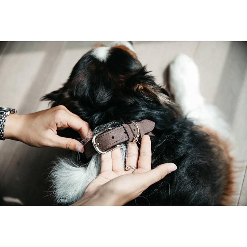Kentucky Dogwear Velvet Leather Dog Collar