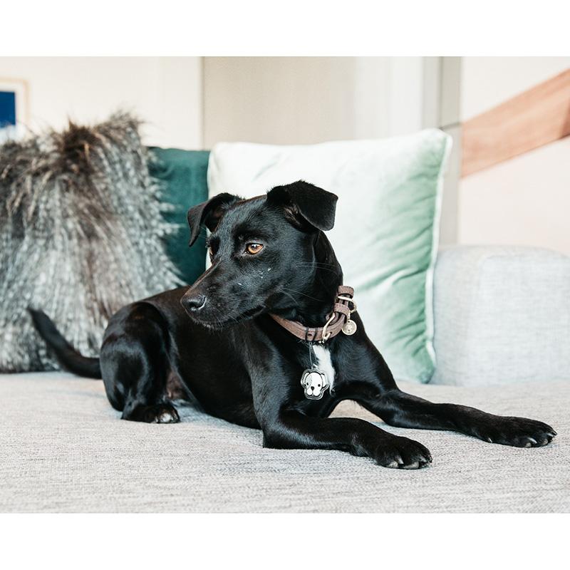 Kentucky Dogwear Velvet Leather Dog Collar2