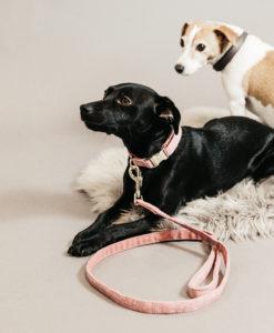 Kentucky Dogwear Wool Dog Lead