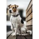 Kentucky Dogwear Reflective Dog Collar
