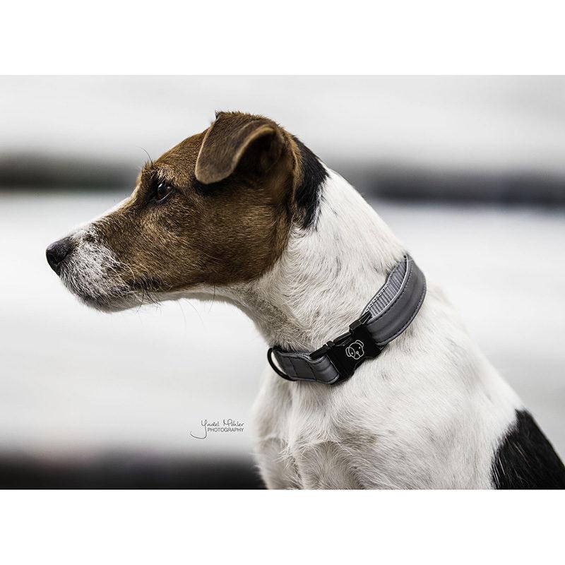 Kentucky Dogwear Reflective Dog Collar2