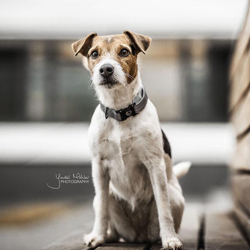Kentucky Dogwear Reflective Collar