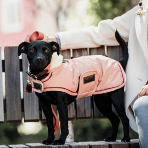 Kentucky Dogwear Waterproof Dog Coat Coral