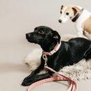 Kentucky Dogwear Dog Collar Wool 6