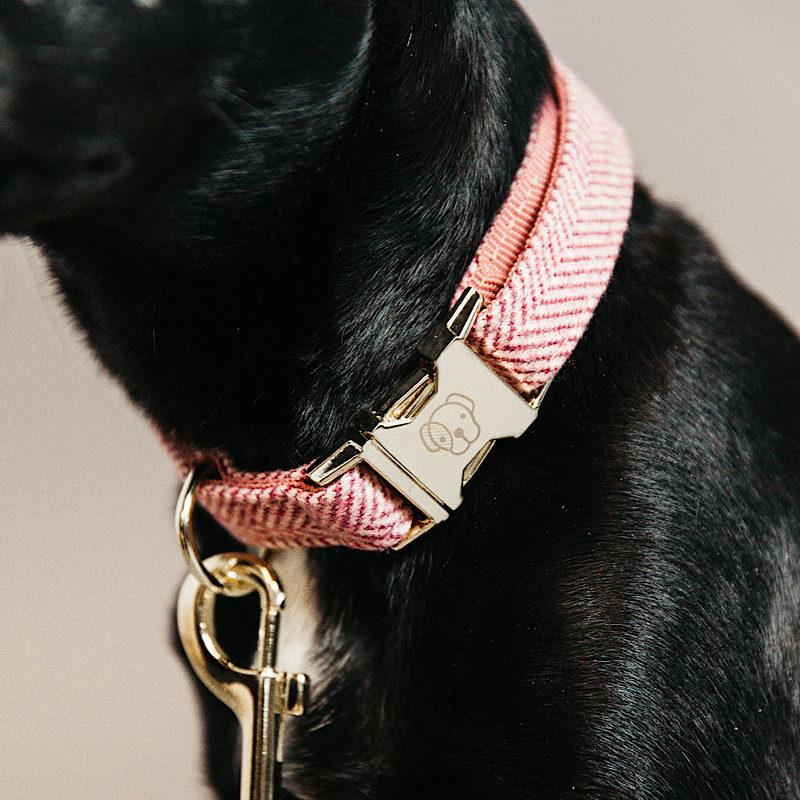 Kentucky Dogwear Dog Collar Wool 2