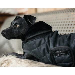 Kentucky Dogwear Dog Coats – Black
