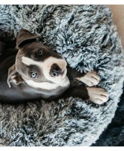 Kentucky Dogwear Dog Bed Donut