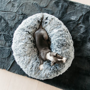 Kentucky Dogwear Dog Bed Donut