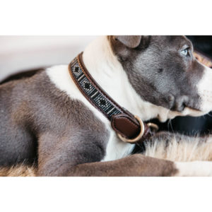 Kentucky Dogwear Dog Collar Pearls