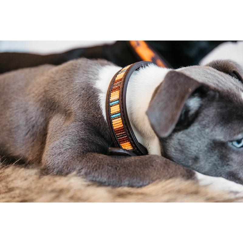 Kentucky Dogwear Dog Collar Pearls