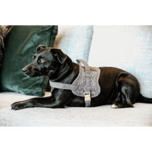 Kentucky Dogwear Dog Harness Body Safe