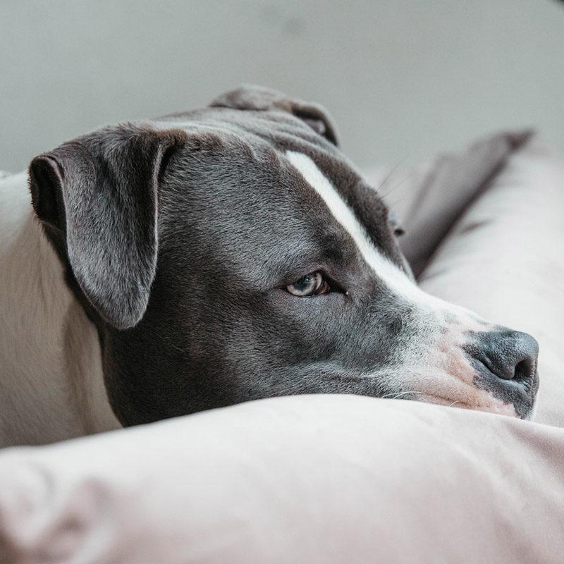 Kentucky Dogwear Velvet Dog Bed 1