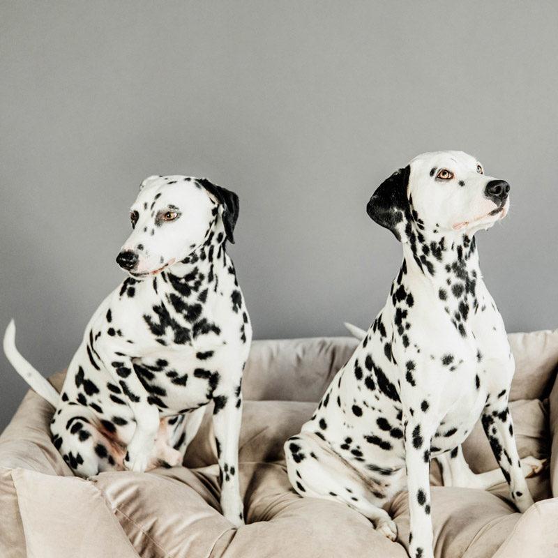 Kentucky Dogwear Velvet Dog Bed 3