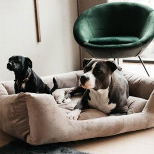 Kentucky Dogwear Velvet Dog Bed