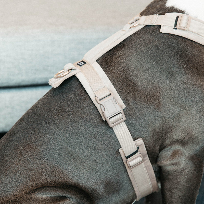 Active Dog Harness Velvet Beige 1