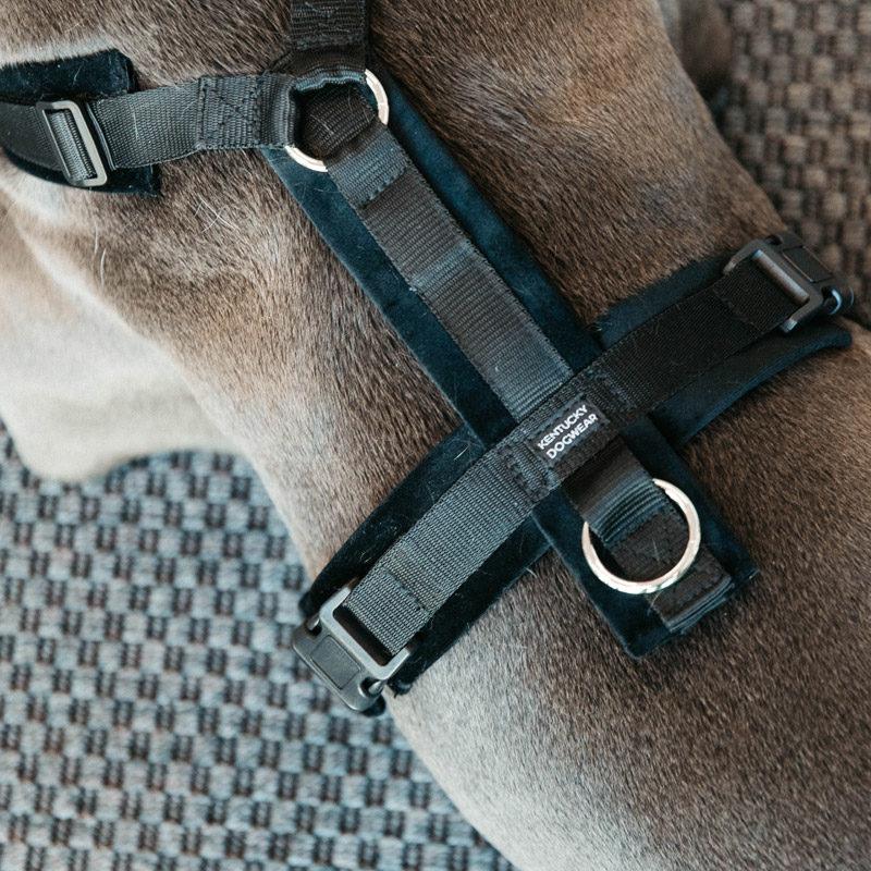 Active Dog Harness Velvet Black 2