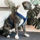 Active Dog Harness Velvet Navy 4