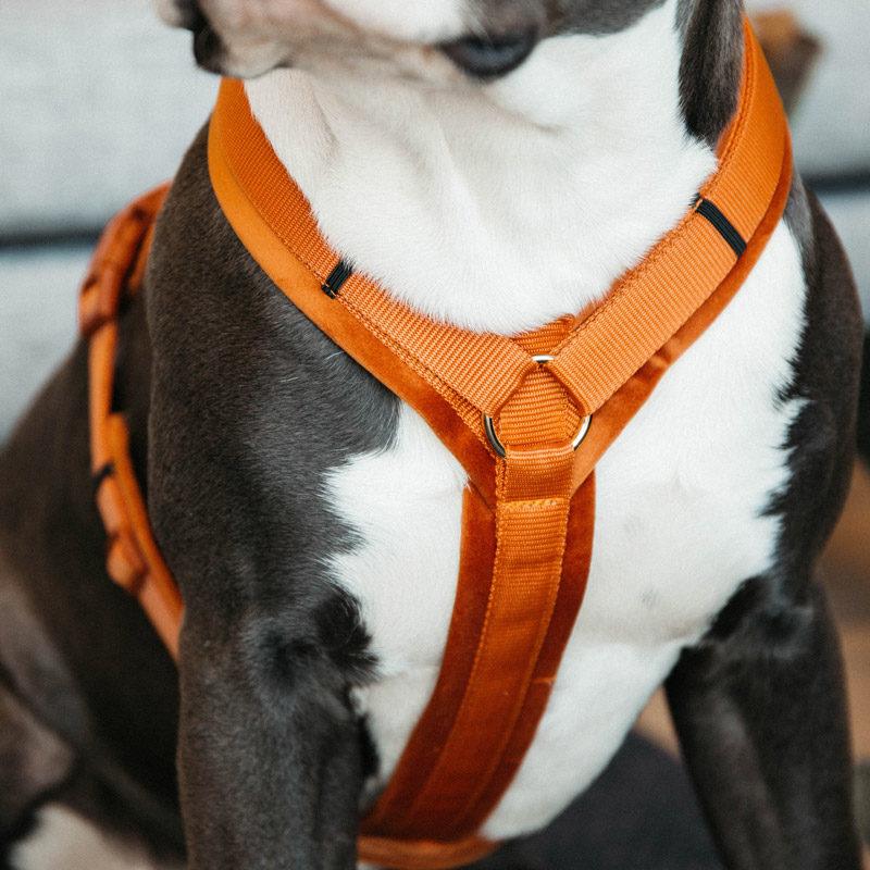 Active Dog Harness Velvet Orange 1