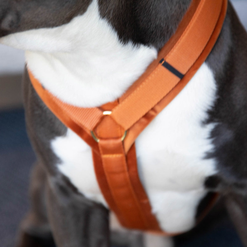 Active Dog Harness Velvet Orange 2